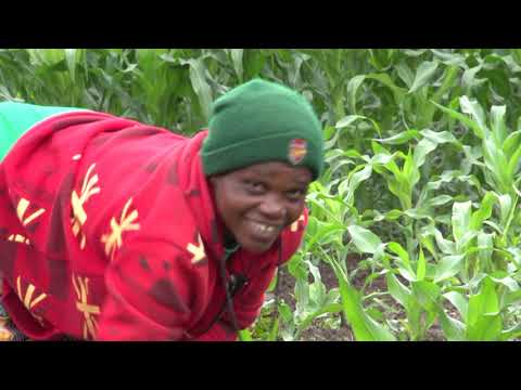 WFP Home Grown School Feeding Programme